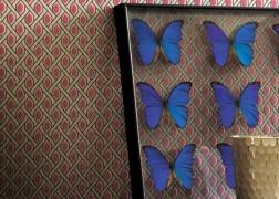 Casamance Hampton Garden Sweat Pea flokkolt 3 féle színben fényes felülettel, 0,53x10 m tekercsben 53.440Ft